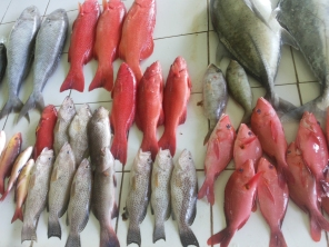Visit fish market in Male